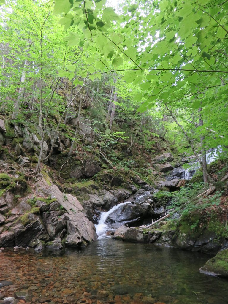 A small waterfall surrounded by rocks and trees.