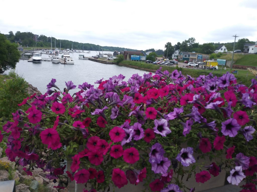 Pink and purple flowers in front of a river