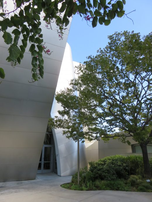 A tree in a courtyard in front of the silver of the Disney Concert Hall