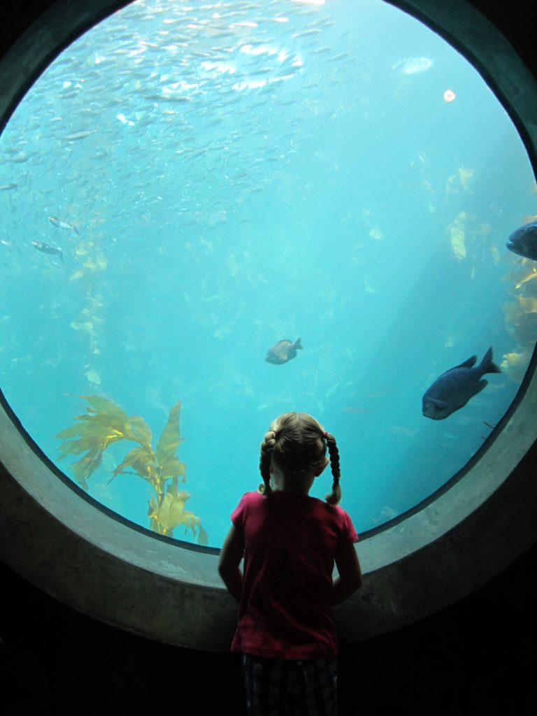 Small girl in pigtail braids standing in front of a large circle aquarium window looking at fish swimming