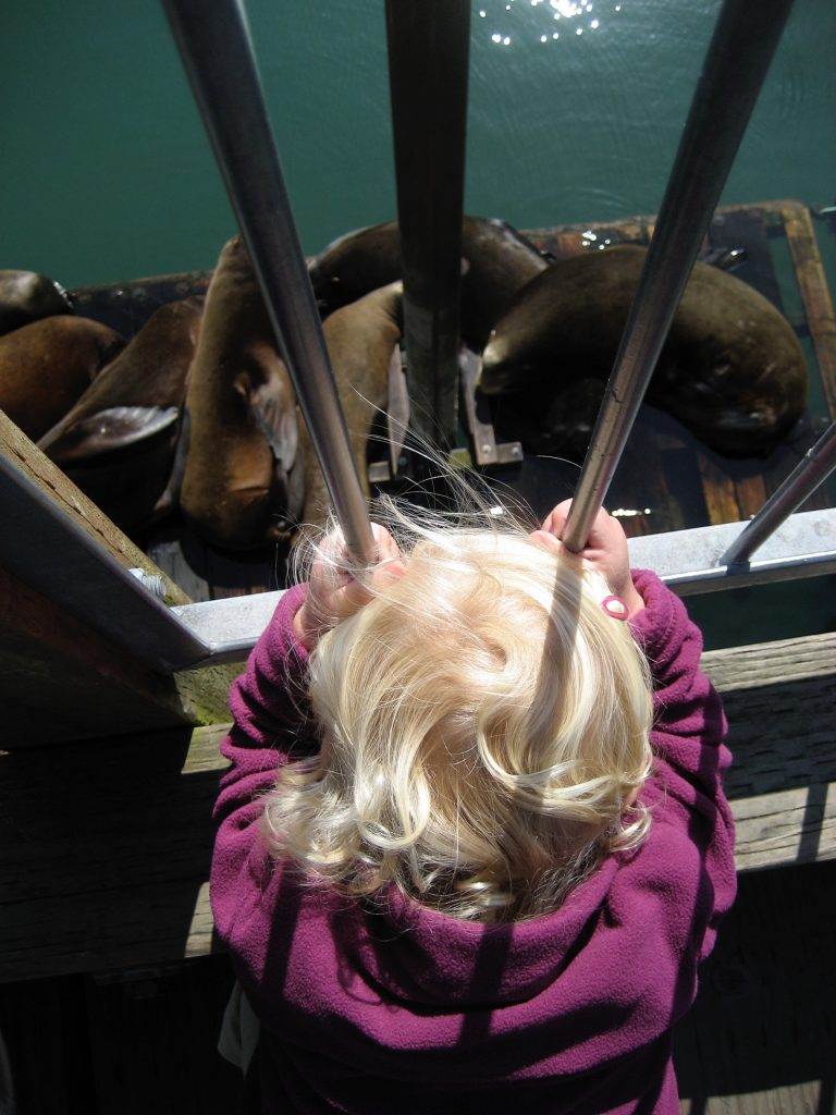 Toddler looks down at seals on a wooden dock