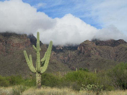 Saguaro cactus in front of cloud-shrouded mountains